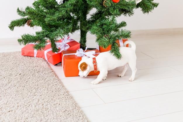 Dog jack russel sob uma árvore de natal com presentes comemorando o natal