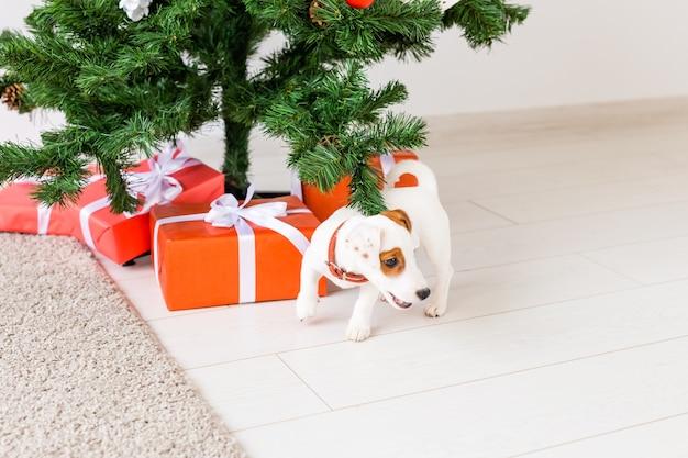 Dog jack russel sob uma árvore de natal com presentes e velas comemorando o natal