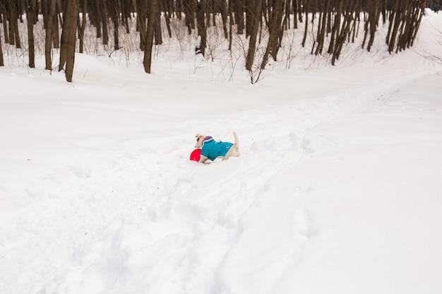 Dog jack russell terrier brincando no parque de inverno
