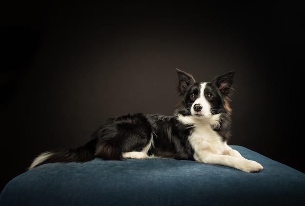 Dog pose 2