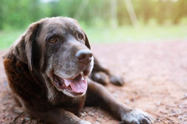 Dog tímido culpado é um cão de caça de abrigo esperando olhando para cima com olhos solitários um olhar intenso ao ar livre na natureza luz do sol da manhã.