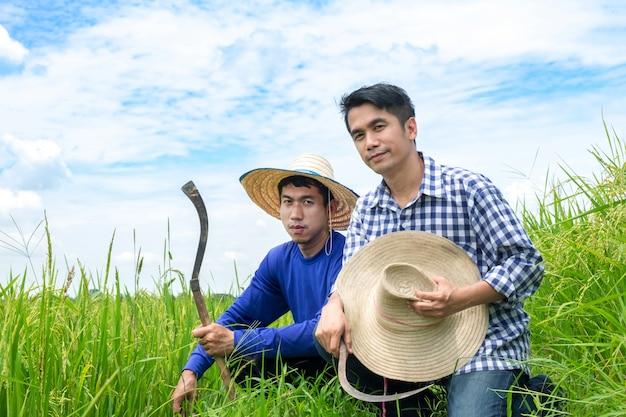 Dois agricultores asiáticos masculinos estão ajoelhados em campos de arroz verde, céu azul claro.