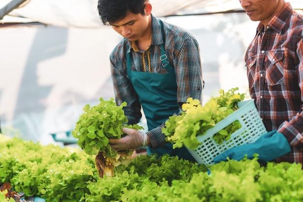 Dois agricultores escolhendo salada em estufa hidropônica, conceito de comida saudável
