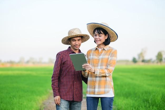 Dois agricultores homem e mulher em pé e usando o tablet na fazenda de arroz verde.