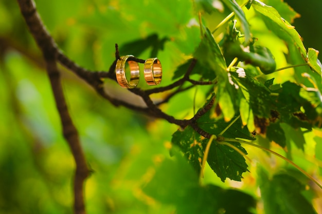 Dois anéis de casamento em um galho com backgroung turva