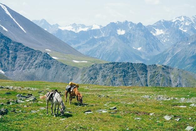 Dois belos cavalos está pastando no prado verde alpino entre grandes montanhas nevadas.
