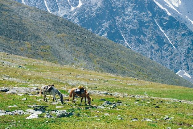 Dois belos cavalos estão pastando no prado alpino verde entre grandes montanhas nevadas. maravilhosa paisagem cênica da natureza das montanhas com cavalos. cenário de montanhas vívidas com cavalos de carga e geleiras gigantes.