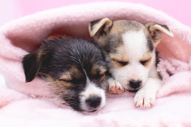 Dois cachorrinhos adoráveis estão dormindo