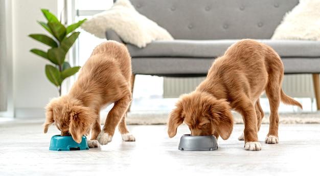 Dois cachorrinhos comendo em tigelas no chão em casa