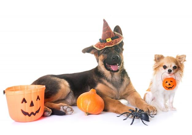 Dois cachorros e dia das bruxas