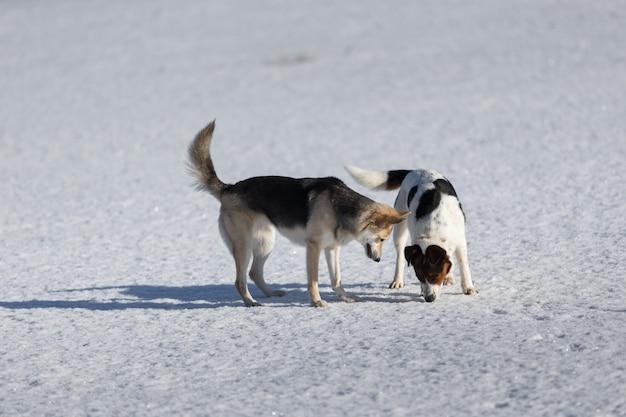 Dois cachorros engraçados brincando juntos no campo de neve de inverno ao ar livre