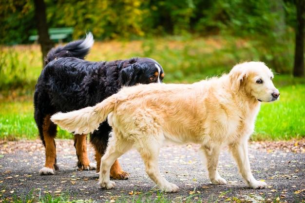 Dois, cachorros, ligado, prado, parque