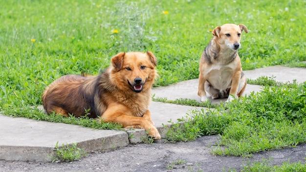 Dois cachorros no jardim no beco entre a grama verde