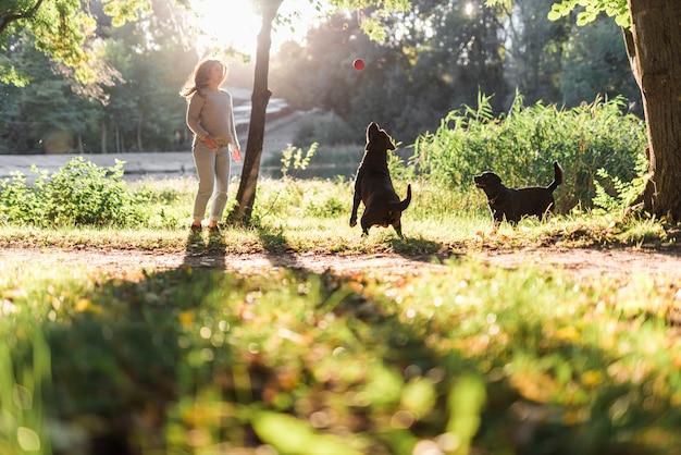 Dois, cachorros, tocando, com, bola, parque