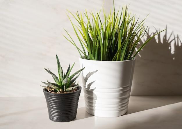 Dois cactos de plantas em vasos e grama artificial