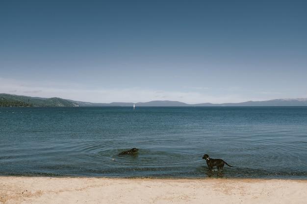 Dois cães em uma praia encalham em pé e nadando com montanha e céu azul