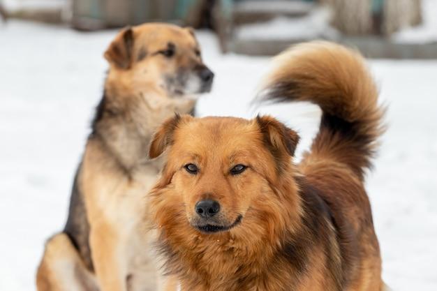 Dois cães no inverno ao ar livre em um fundo de neve branca