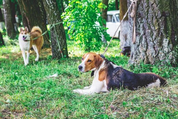 Dois cães no parque na coleira, amarrados às árvores