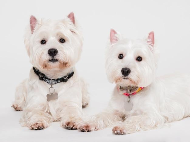 Dois cães pequenos bonitos