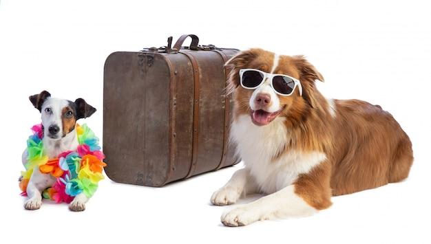 Dois cães prontos para ir de férias