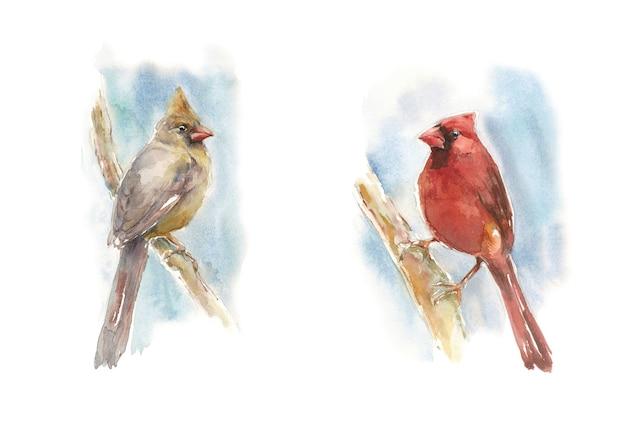 Dois cardeais sentados em um galho - ilustração em aquarela