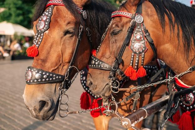 Dois cavalos decorados para montar turistas em uma carruagem.
