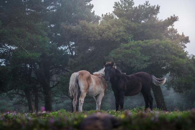Dois cavalos juntos ao longo de uma floresta nublada em baixo