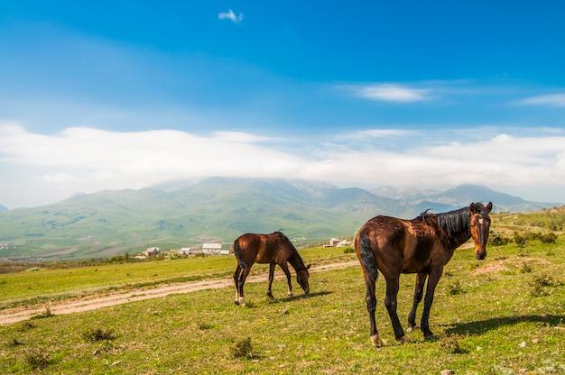 Dois cavalos marrons pastam no gramado verde sobre fundo de montanhas rochosas e céu azul com nuvens