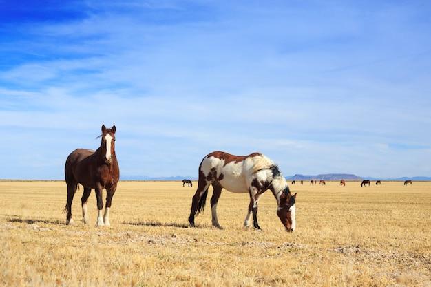 Dois cavalos pastando no campo agrícola