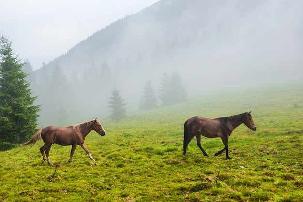 Dois cavalos selvagens correndo no campo enevoado