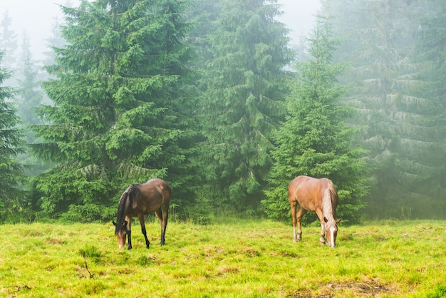 Dois cavalos selvagens correndo pastando na floresta enevoada