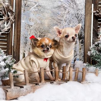 Dois chihuahuas bem vestidos em uma ponte, em um cenário de inverno