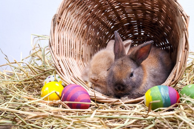 Dois coelhinhos fofos gostam de brincar travessamente em cestos de madeira e palha. existem muitos ovos de páscoa coloridos.