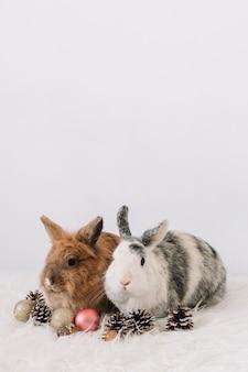 Dois coelhos bonitos com decoração de natal