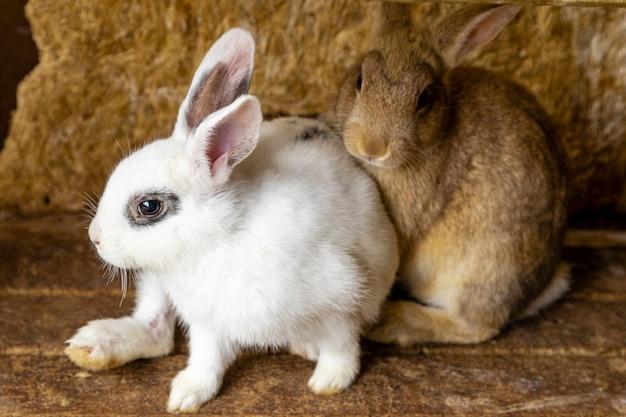 Dois coelhos sentados no chão de madeira.