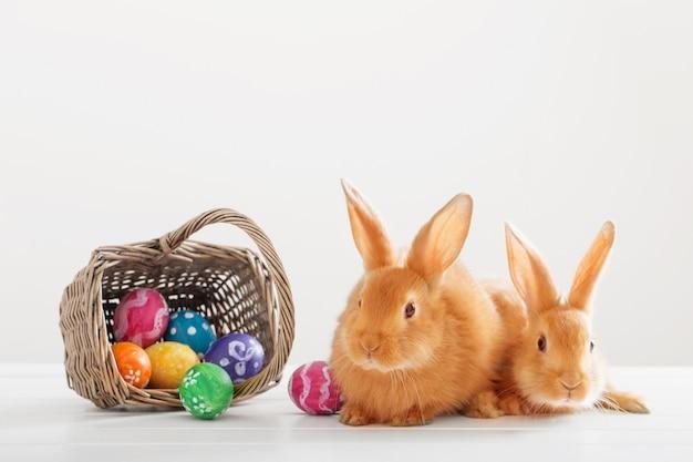 Dois coelhos vermelhos com ovos de páscoa no fundo branco