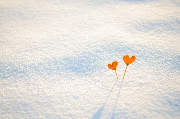 Dois corações de tangerina laranja vintage em varas na neve branca