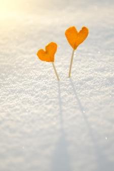 Dois corações de tangerina laranja vintage na neve branca para o amor e o conceito de são valentim
