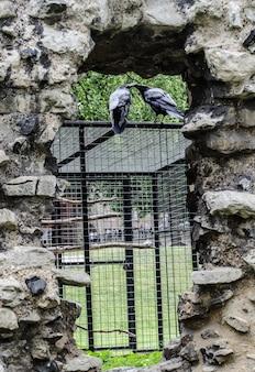 Dois corvos se beijando em uma gaiola metálica sob a luz do sol durante o dia
