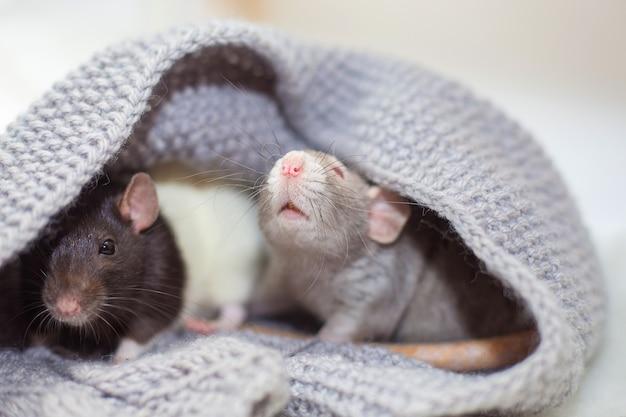 Dois decorativos sentar em um suéter de malha e são aquecidos.