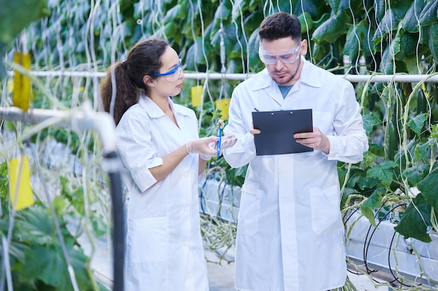 Dois engenheiros agrícolas na plantação