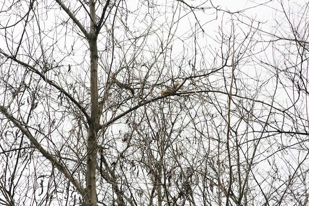 Dois esquilos escalam os galhos nus de uma árvore na primavera