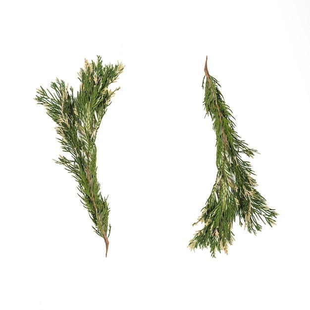 Dois galhos de plantas exóticas