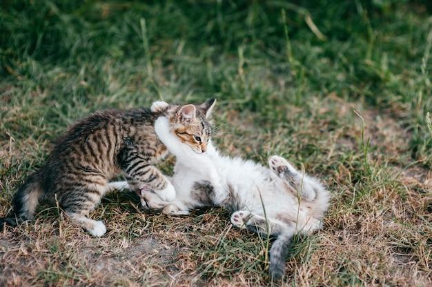 Dois gatinhos brincando ao ar livre na grama