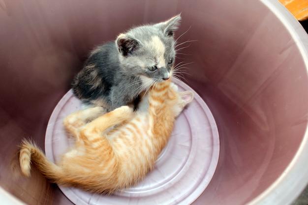 Dois gatinhos brincando em uma bacia.