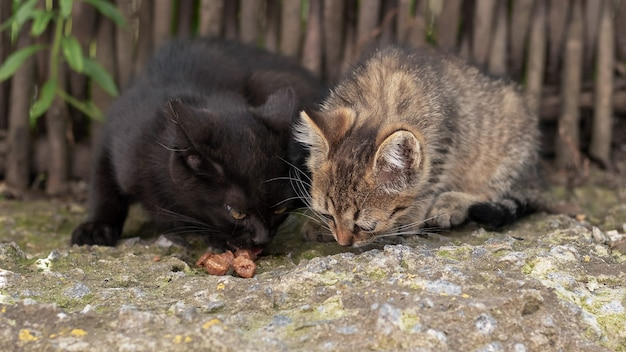 Dois gatinhos estão comendo no jardim perto da cerca