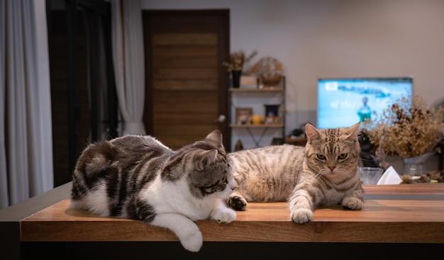 Dois gatinhos fofos sentados no balcão de madeira da sala de estar durante a noite