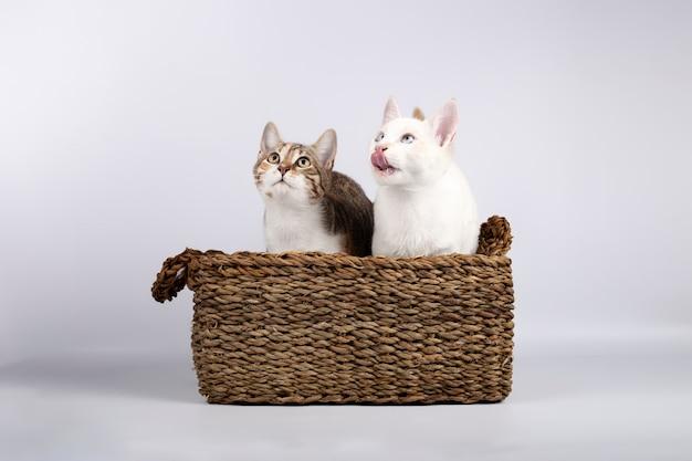 Dois gatinhos jovens bonitos juntos em uma cesta de vime
