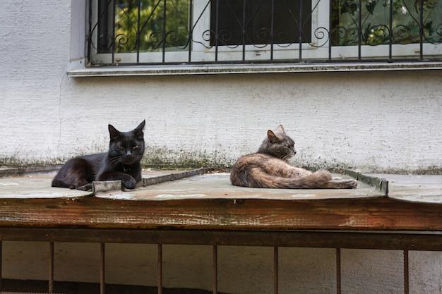 Dois gato vadio deitado no telhado de estanho sob a janela da casa