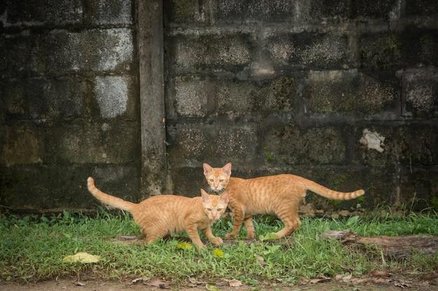 Dois gatos amigáveis, olhando para a câmera